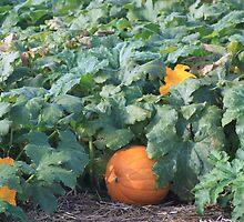 Pumpkin Patch by milerunner81