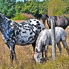 Appaloosa&#x27;s, Mother and Foal by scenebyawoman