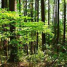Rainforest Scene by stevefinn77