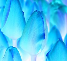 Tulips in Blue by stevefinn77