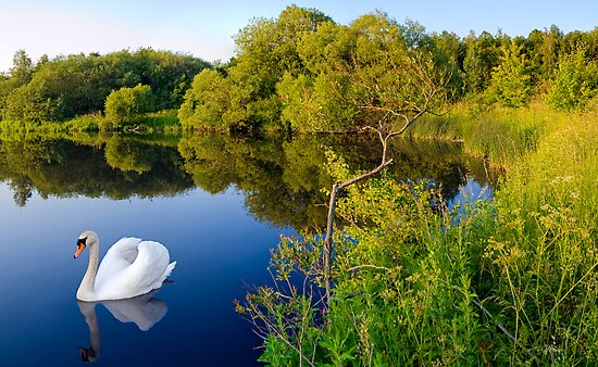 Swan Lake by Keld Bach