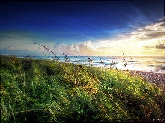 Sunrise and Sea Oats by Noble Upchurch