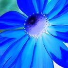 Blue by stevefinn77