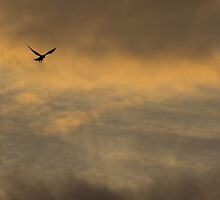 Fly by Night by Withns