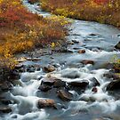 Autumn creek by ilpo laurila