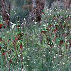 Wild Flowers, West Australia by SoulSparrow