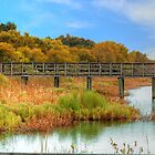Pier Through The Wetlands by Kathy Baccari