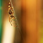 Hanging out...yup...spiders again! by RoughCutMatt