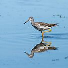 Mellow Yellowlegs by Bill McMullen
