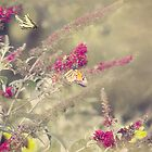 Monarch Butterflies and Friends! by KatMagic Photography