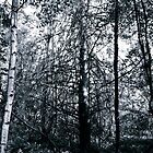 Black forest V by jjustinico