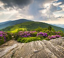 Jane Bald in Bloom - Roan Mountain Highlands Landscape by Dave Allen