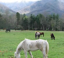 Cades Cove-Horses of the Smokies by JeffeeArt4u
