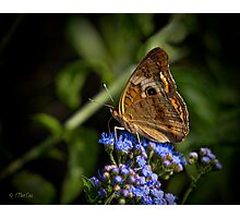 Buckeye Butterfly Wings Upright Photographic Print
