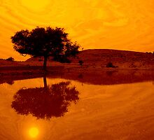 Desert Reflections by Valerie Rosen