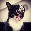 Yawn Like You Mean It by Trish Mistric