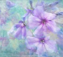 shades of purple by Teresa Pople