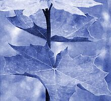 Blue Maple Leaf by Vac1