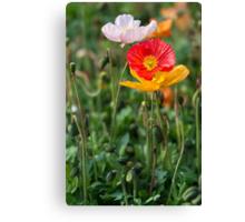 Poppies 2 Canvas Print