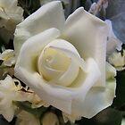 White Rose by John Witte