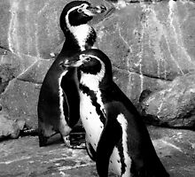 Black and White Penguin Two by Barnbk02