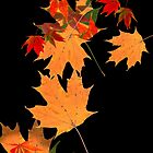 Colorful autumn maple leaf design  by Mariannne Campolongo
