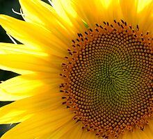 sunny by yvesrossetti