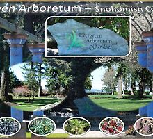 Evergreen Arboretum by AboutheWOW