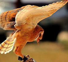 Extended Wings by Larry Trupp