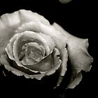 Black and White Rose by oftheessence