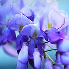 Wisteria Blues by YingDude