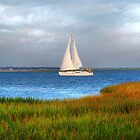 Sailing At Charleston Bay by Kathy Baccari