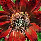 Red Ornamental Sunflower by Astrid Ewing Photography