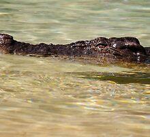 Natures Finest Predator by dazscottphoto
