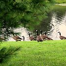 Wild Goose Chase by wallace66