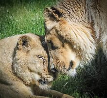 A Tender Moment by Mark Hughes
