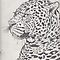 leopard pencils by daniel lamb