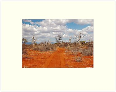 BARREN LAND - AFRICA by Magaret Meintjes