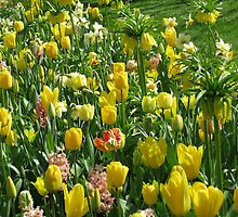 Golden Giants - Keukenhof Crown Imperials by MidnightMelody