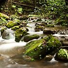Maquarie Rivulet by CSchulstad