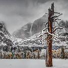 Winter Tree by Leasha Hooker