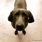 An Innocent Dog by mandamaeh