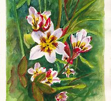 Sparaxis flowers in the Hellebore patch by Dai Wynn