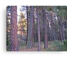 ponderosa forest Canvas Print