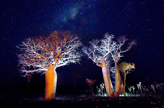 The Boab Garden at Midnight by David Haworth