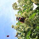 Butterflies Case by Sweetpea06