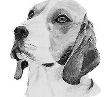 Beagle Dog Pencil Drawing by Catherine Roberts