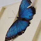 Butterfly in Key West by Sweetpea06