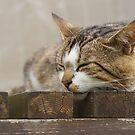 Sleeping cat  by flashcompact