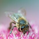 Bee by Henry Jager